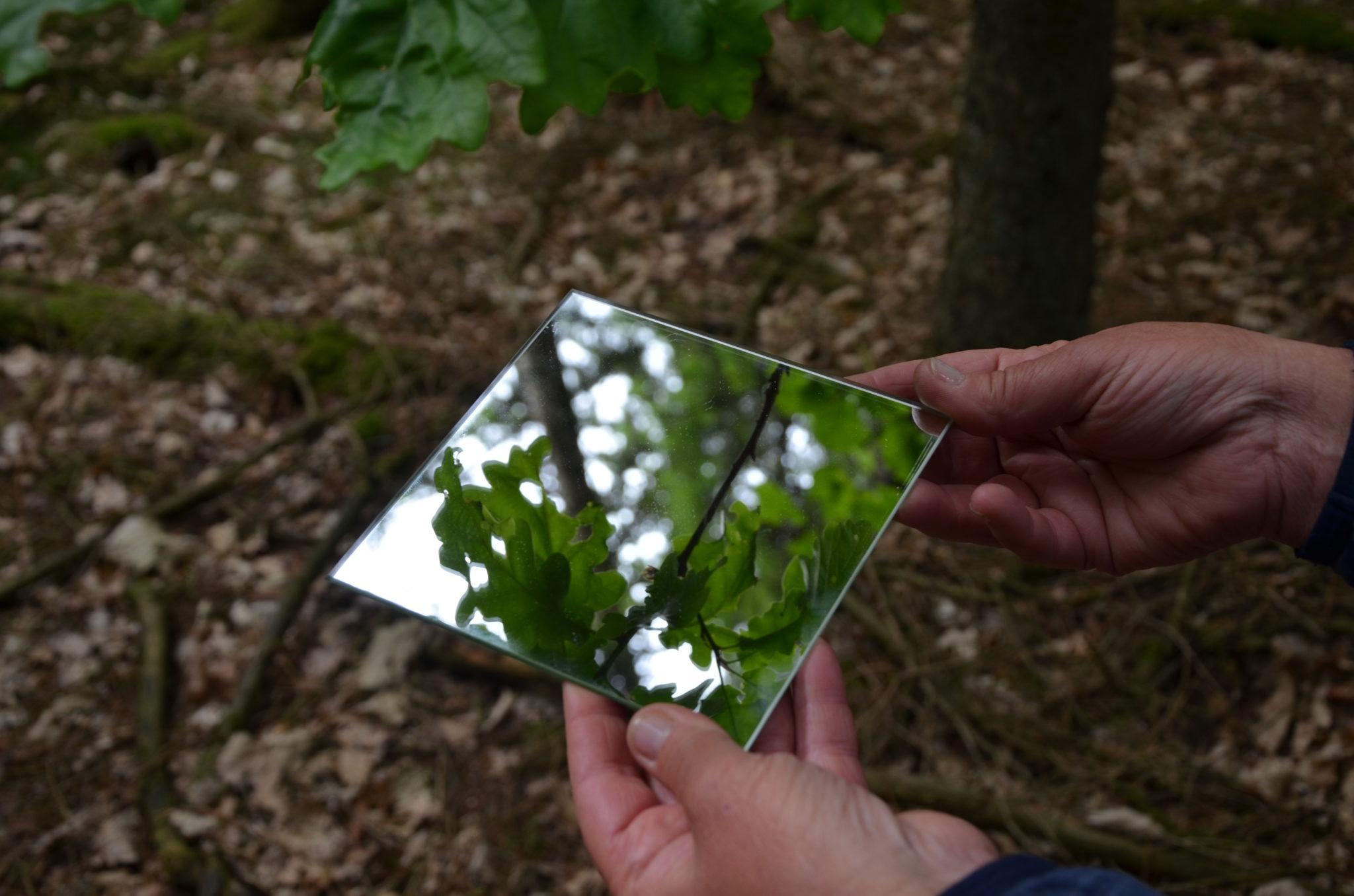 Der Wald - dein Spiegel