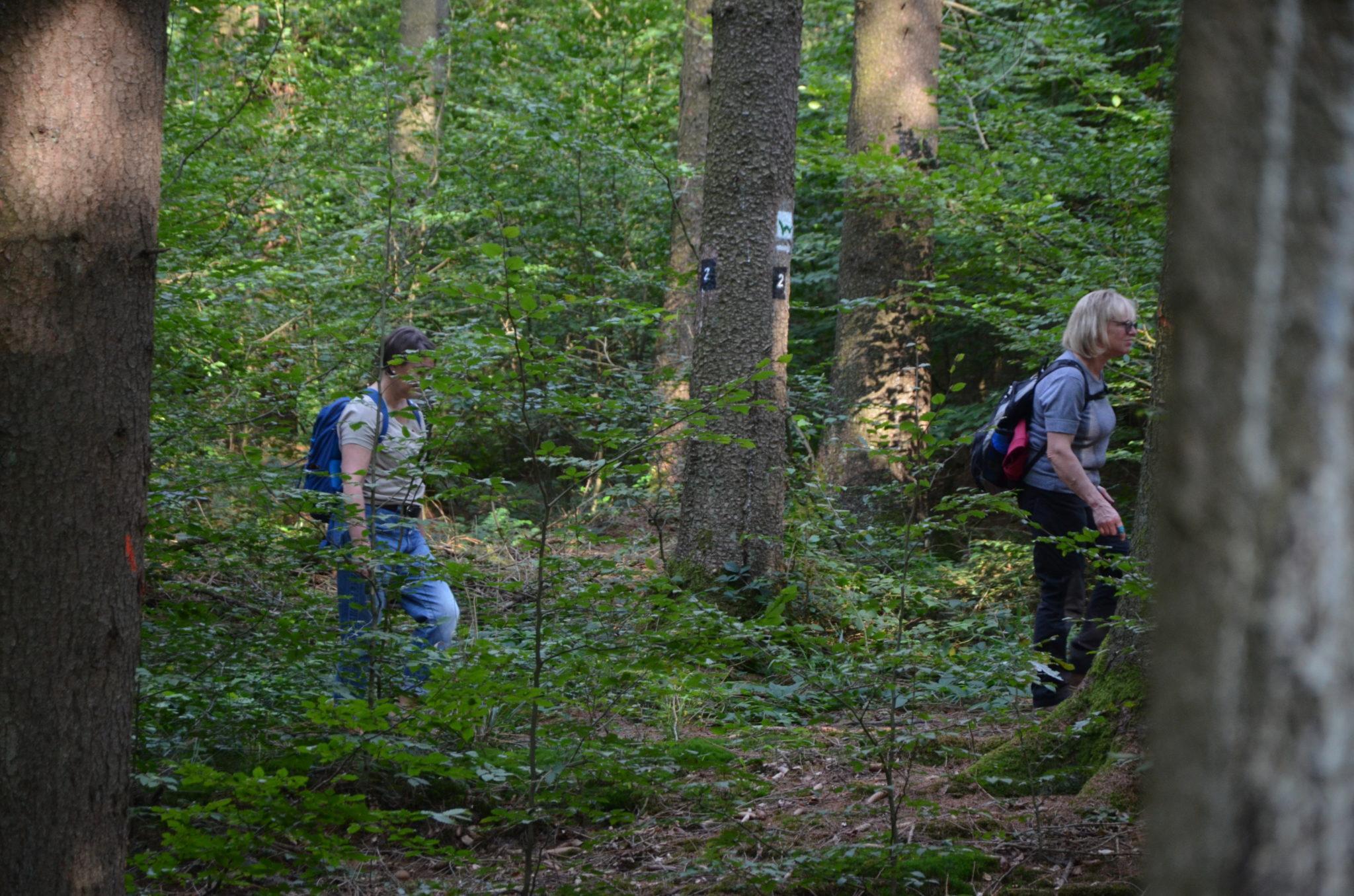 Streifzug im Wald